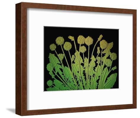 Natures Old Gold-Emiko Aumann-Framed Art Print