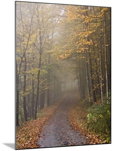 Rural Road in Autumn at Dawn, Vermont-John Churchman-Mounted Photographic Print