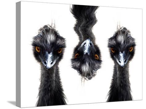 Three Emus-Abdul Kadir Audah-Stretched Canvas Print