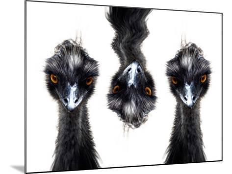 Three Emus-Abdul Kadir Audah-Mounted Photographic Print