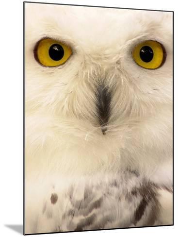 Close-Up of a Snowy Owl-Abdul Kadir Audah-Mounted Photographic Print