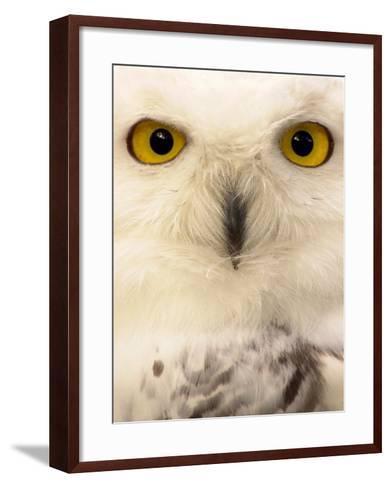 Close-Up of a Snowy Owl-Abdul Kadir Audah-Framed Art Print