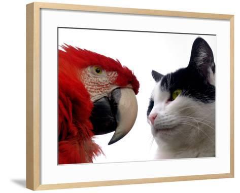 The Parrot and the Cat-Abdul Kadir Audah-Framed Art Print