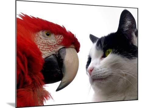 The Parrot and the Cat-Abdul Kadir Audah-Mounted Photographic Print