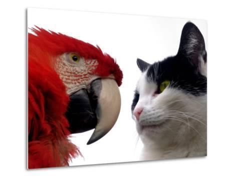 The Parrot and the Cat-Abdul Kadir Audah-Metal Print