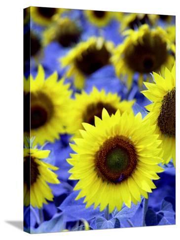 Sunflowers Closeup-Abdul Kadir Audah-Stretched Canvas Print