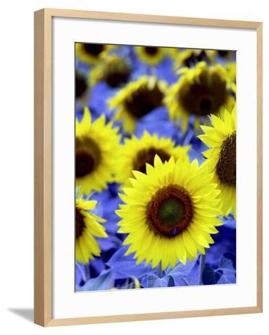 Sunflowers Closeup-Abdul Kadir Audah-Framed Art Print