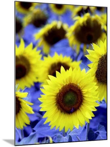 Sunflowers Closeup-Abdul Kadir Audah-Mounted Photographic Print