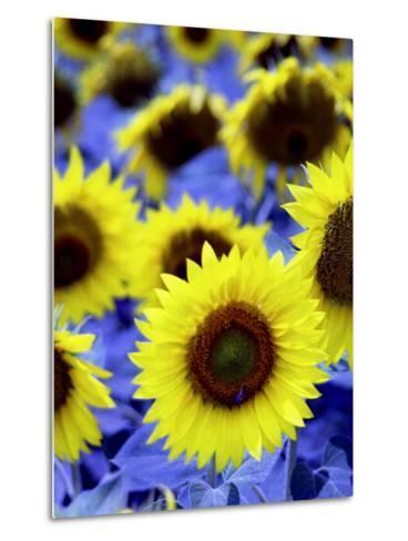 Sunflowers Closeup-Abdul Kadir Audah-Metal Print