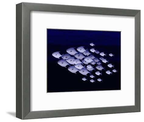 School of Silver Fish-Rich LaPenna-Framed Art Print