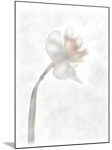 Still Life of a Flower-Joyce Tenneson-Mounted Photographic Print