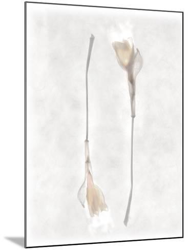 Still Life of Two Flowers-Joyce Tenneson-Mounted Photographic Print