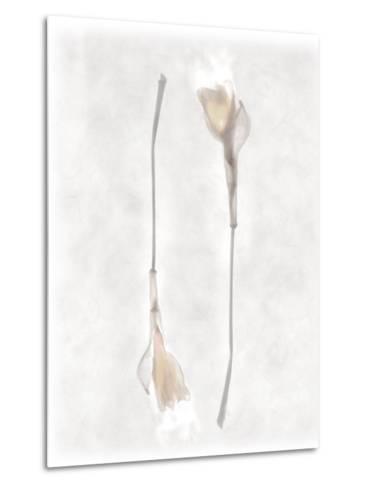 Still Life of Two Flowers-Joyce Tenneson-Metal Print