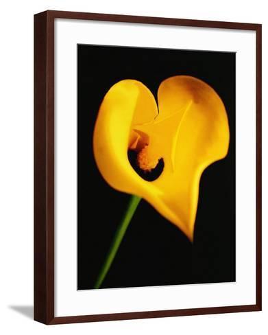 A Yellow Lily with an Arrow as the Stigma-Abdul Kadir Audah-Framed Art Print