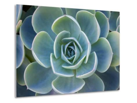 Close-Up of a Succulent Plant-Diane Miller-Metal Print