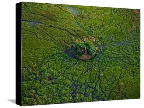 Aerial View of Animal Trails Leading to a Small Island in the Delta-Beverly Joubert-Stretched Canvas Print