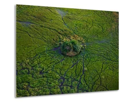 Aerial View of Animal Trails Leading to a Small Island in the Delta-Beverly Joubert-Metal Print