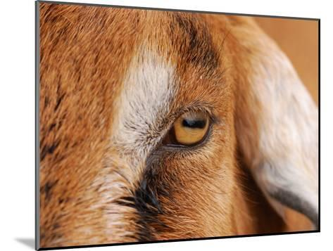Close-up of a Nubian Goat's Eye-Darlyne A^ Murawski-Mounted Photographic Print