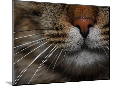 Close-up of the Nose of a Domestic Cat-Joe Petersburger-Mounted Photographic Print