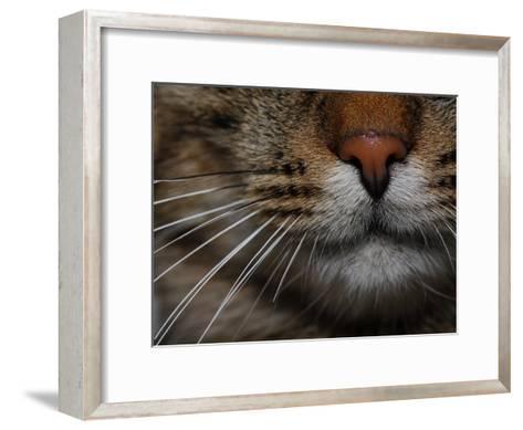 Close-up of the Nose of a Domestic Cat-Joe Petersburger-Framed Art Print