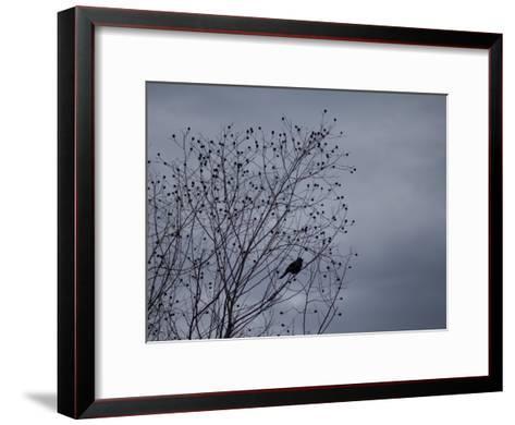 Silhouette of a Bird in a Tree Against a Cloudy Sky-Joel Sartore-Framed Art Print