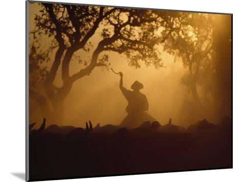 Cowboy and Cattle Silhouetted Against the Setting Sun-Joel Sartore-Mounted Photographic Print