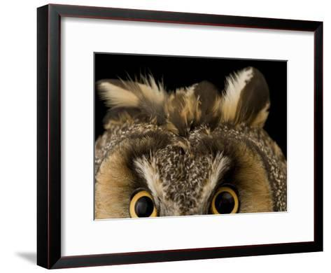 Close-up of the Eyes and Ears of a Long-Eared Owl, Asio Otus-Joel Sartore-Framed Art Print