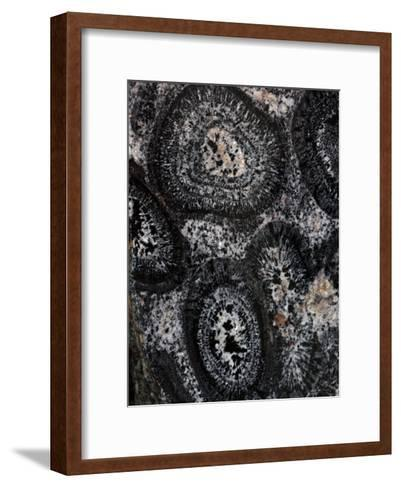 Close-up of Pre-Cambrian Orbicular Granite-John Cancalosi-Framed Art Print