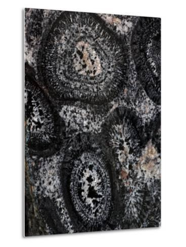 Close-up of Pre-Cambrian Orbicular Granite-John Cancalosi-Metal Print
