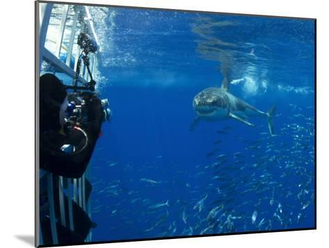 Great White Shark Swims Close to Divers in a Cage-Mauricio Handler-Mounted Photographic Print