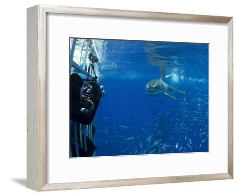 Great White Shark Swims Close to Divers in a Cage-Mauricio Handler-Framed Art Print