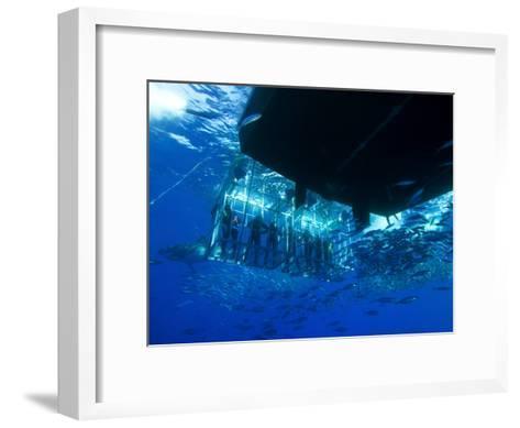 Great White Shark Swims Near Underwater Photographers in a Cage-Mauricio Handler-Framed Art Print