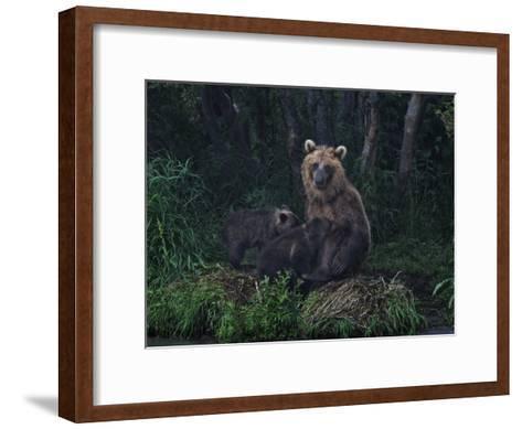 Brown Bear Breast-Feeding Her Cubs at Kurilskoye Lake Preserve-Randy Olson-Framed Art Print