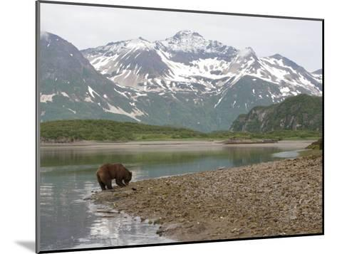 Alaskan Brown Bear Foraging by the Water in a Snowy Mountain Landscape-Roy Toft-Mounted Photographic Print