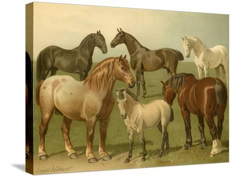 Horse Breeds II-Emil Volkers-Stretched Canvas Print