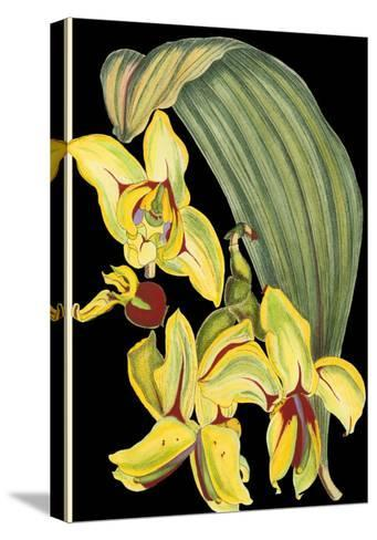 Tropical Plant on Black I--Stretched Canvas Print