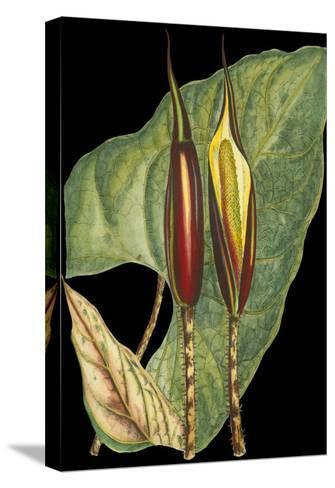 Tropical Plant on Black IV--Stretched Canvas Print