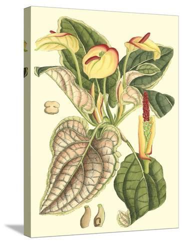 Botanical Fantasy III--Stretched Canvas Print