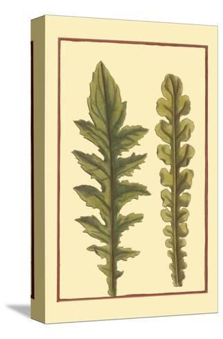 Vintage Leaf III--Stretched Canvas Print
