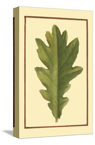 Vintage Leaf IV--Stretched Canvas Print
