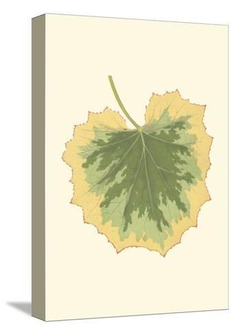 Tropical Leaf Collection V--Stretched Canvas Print