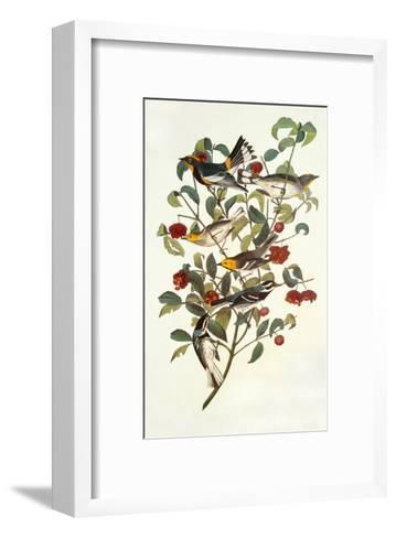 Audubon's Warbler-John James Audubon-Framed Art Print