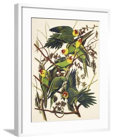 Carolina Parrot-John James Audubon-Framed Art Print