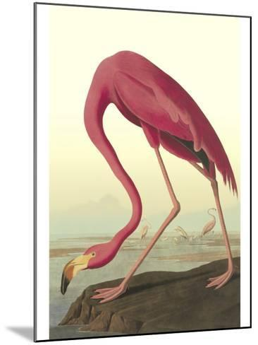 American Flamingo-John James Audubon-Mounted Art Print