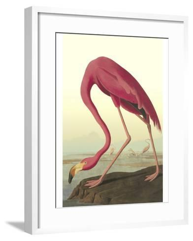 American Flamingo-John James Audubon-Framed Art Print