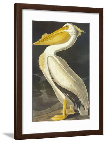American White Pelican-John James Audubon-Framed Art Print
