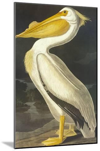 American White Pelican-John James Audubon-Mounted Art Print