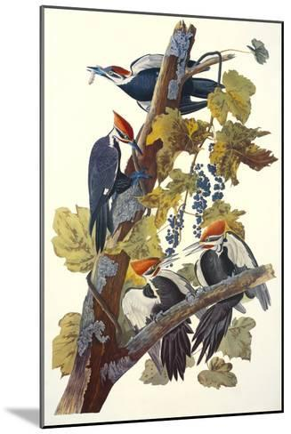 Pileated Woodpecker-John James Audubon-Mounted Art Print