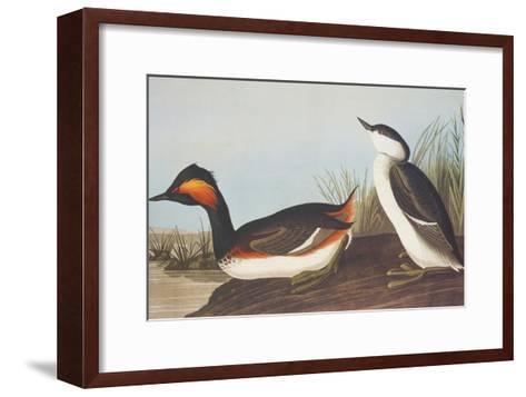 Eared Grebe-John James Audubon-Framed Art Print