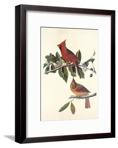Cardinal Grosbeak-John James Audubon-Framed Art Print
